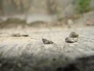 [+] Увеличить - Камни