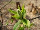 Посмотреть все фотографии серии Весна 2007