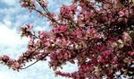Посмотреть все фотографии серии Цветочный букет