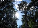 [+] Увеличить - Крыша леса