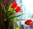 [+] Увеличить - Весенний букетик тюльпанов