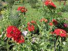 Посмотреть все фотографии серии цветы моего садика
