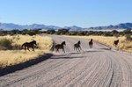 [+] Увеличить - Дикие лошади пустыни Намиб
