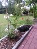 Посмотреть все фотографии серии Мои цветы.