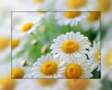 Посмотреть все фотографии серии Ромашки