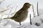 Посмотреть все фотографии серии причуды природы-зимняя серия