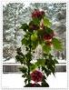 Посмотреть все фотографии серии Цветы.