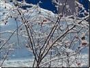 Посмотреть все фотографии серии Погода