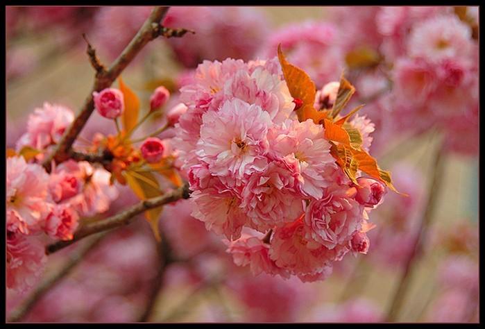 маленькие цветущие деревья из бисера схемы: Alive most commonly.