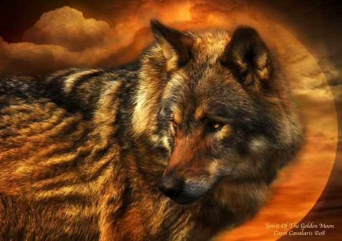 The Language of Wolves  Living with Wolves