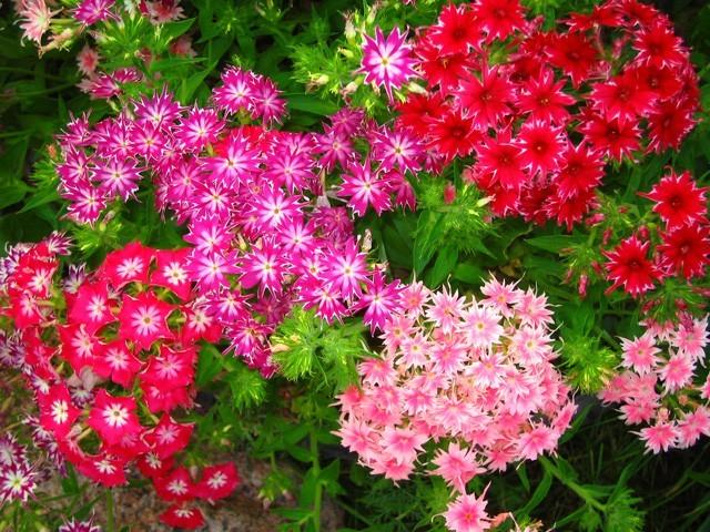Полевые цветы из гофрировонной бумаги