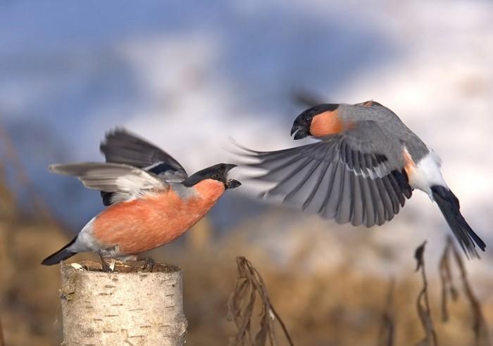Самые зимние птицы.
