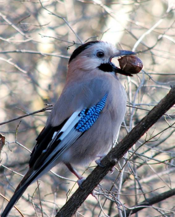 Фото 52.  Птицы готовятся к зиме.  Осень в лесу.