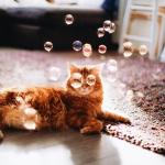 Говорят, у котиков 9 жизней, но лишь одну из них они проживают с нами.