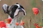 Посмотреть все фотографии серии Кошки и собаки