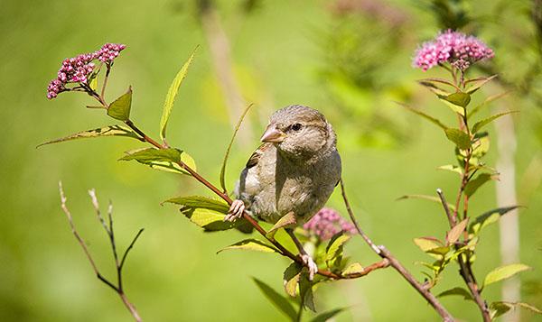 http://img0.liveinternet.ru/images/foto/b/1/986/637986/f_6027701.jpg