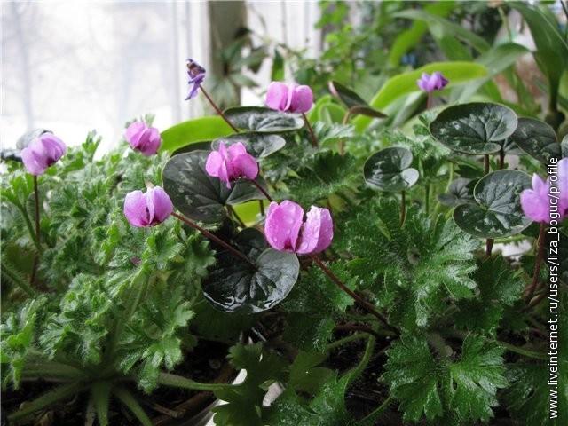 Цветы для кашпо цветы комнатные похож