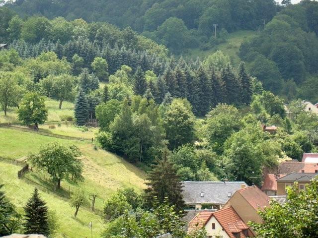 Das Schloss Kuckuckstein 99040