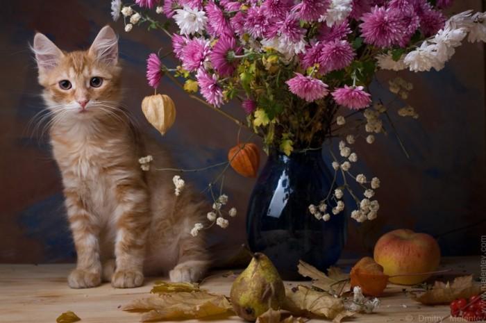 Осенний котюрморт