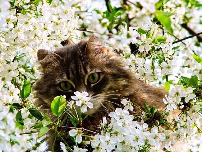 Первый день весны день кошек картинки