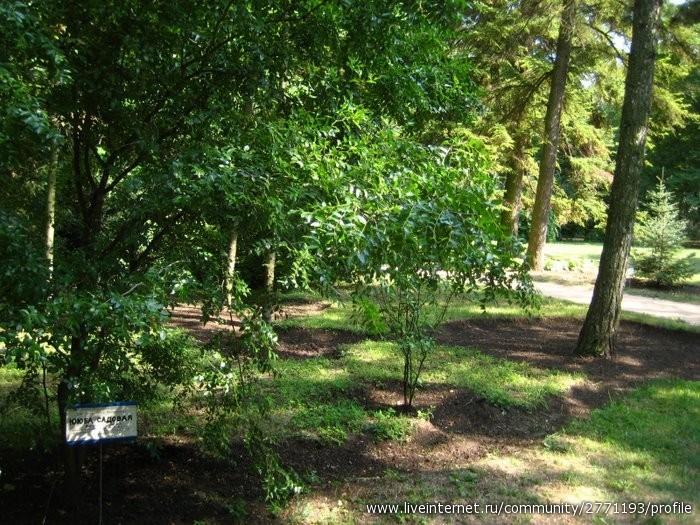 Гуляем по парку в Аскании - памятник любви к природе переехавших сюда немцев. В этой степной зоне деревья не растут. Без принуд полива...