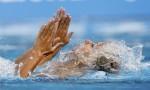 Надин Брандл и Ланг Ливия (Исходный текст (английский):Nadine Brandl and Lang Livia) из Австрии. Выступление пар на чемпионате Европы по синхронному плаванию в Будапеште, 5 августа 2010 года.