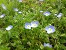 [+] Увеличить - Весенние цветы