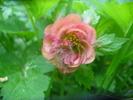 [+] Увеличить - Цветочек из леса...