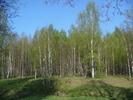 [+] Увеличить - Мой лес...