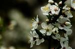 [+] Увеличить - Весна, цветы ...