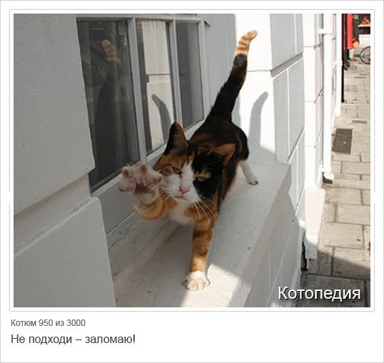 Смешные кошки обсуждение на liveinternet