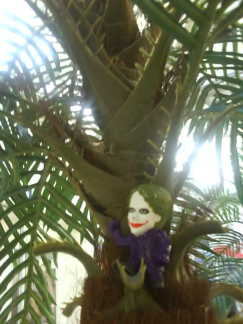 Joker-6 в Майами