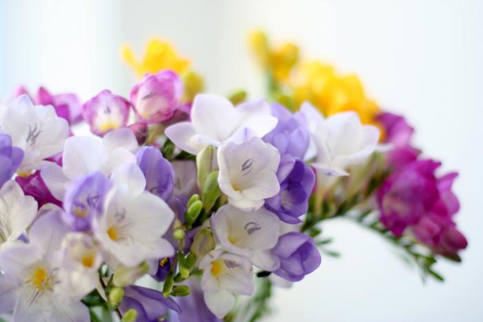 Фото нежных красивых цветов