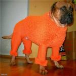 свой цитатник или сообщество! модельки вязанной одежды для собачек.  Размещено с помощью приложения.  Я - фотограф.