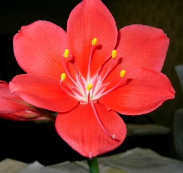 красные цветы фото: