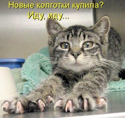 http://img0.liveinternet.ru/images/foto/b/2/apps/1/559/1559358_49f6cd87aaeet.jpg