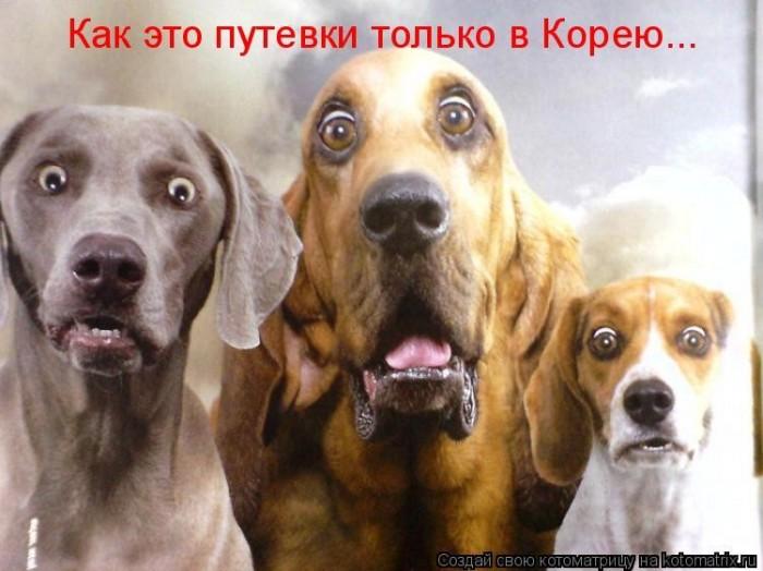 Евросоюз предварительно согласовал новые финансовые санкции против России - Цензор.НЕТ 3961