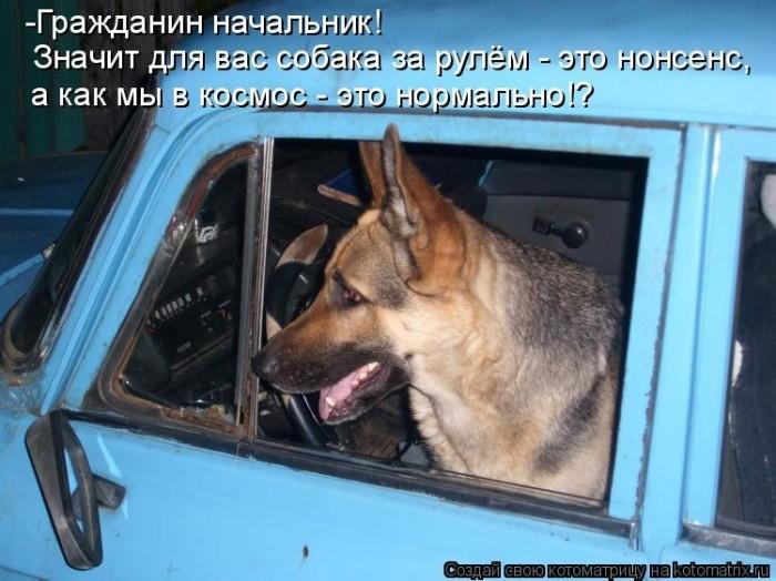 Анекдот Про Собаку