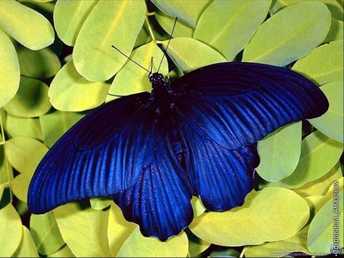http://img0.liveinternet.ru/images/foto/b/2/apps/1/776/1776216_02_butterflies_1024x768.jpg
