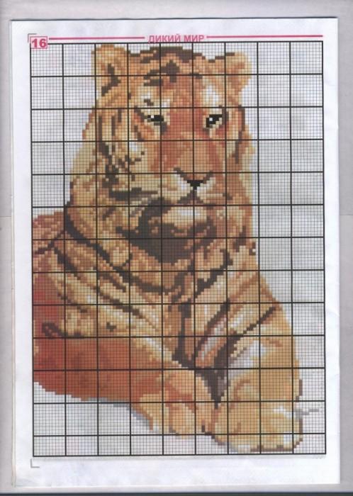 Тигр. Схема 1.