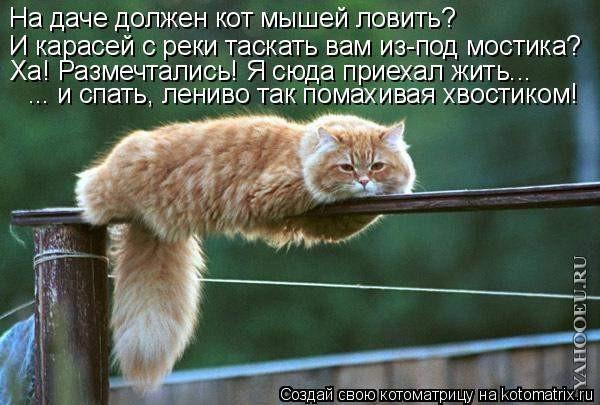 http://img0.liveinternet.ru/images/foto/b/2/apps/1/823/1823824_28.jpg