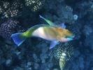 Красное море, Хургада, рыбки.  Рубрики: Животные.