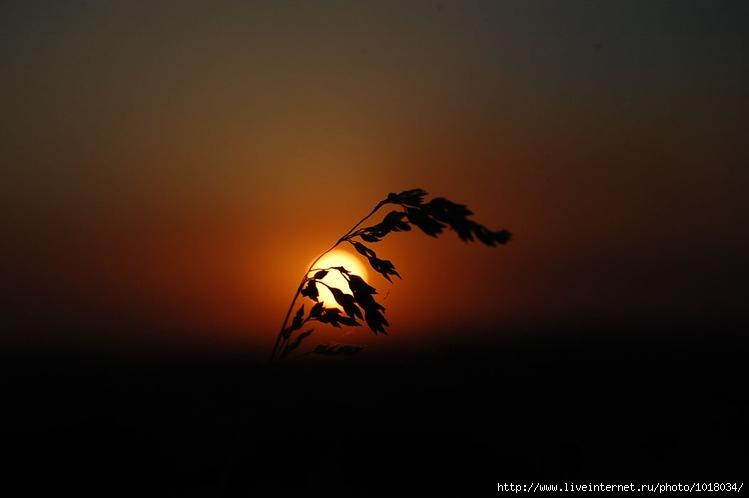 Былинка. Автор: Fotoparacci. Кликните, чтобы перейти к большой фото
