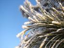 Посмотреть все фотографии серии Зима 2008-2009