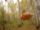 Посмотреть все фотографии серии Осень 2009