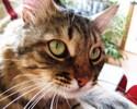 [+] Увеличить - Взгляд вопросительный, кот удивительный :)