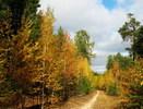 [+] Увеличить - Осень ютися в коридорах своих ветвей...