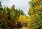[+] Увеличить - Последние лучики на повкусневшей листве...