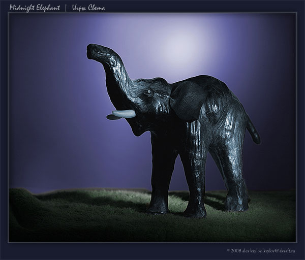 Midnight Elephant
