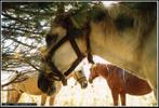 Посмотреть все фотографии серии Алтай